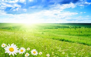 green-landscapes-flowers-daisy-green-field-bright-HD-Wallpapers